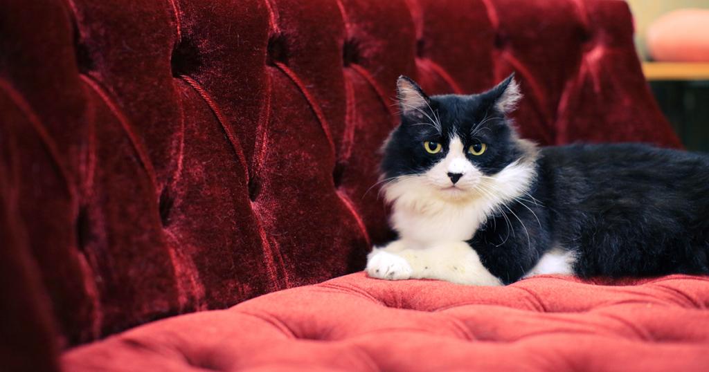 保護猫ストーリー 東京中野店「ライ」