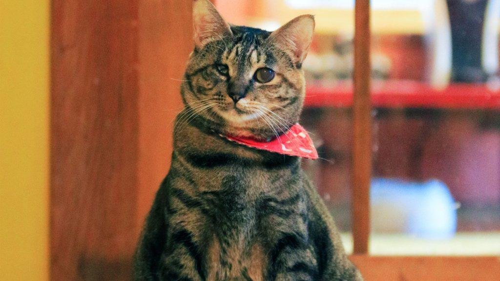保護猫ストーリー 東京お茶の水店「おはぎ」