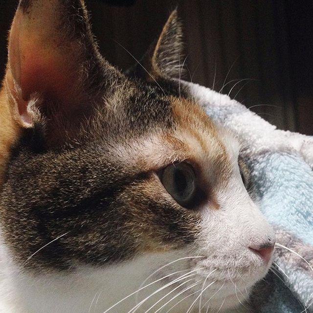 ネコリパブリック うちの子記念日 ストリート出身 元野良 保護猫カフェ出身 ネコリパブリック大阪
