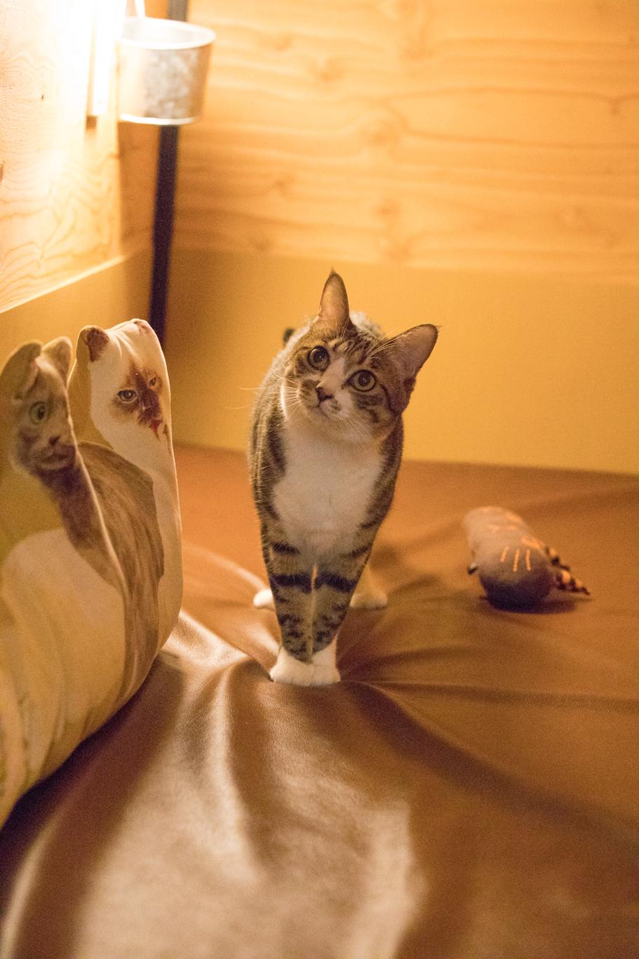 美猫、かりんちゃん