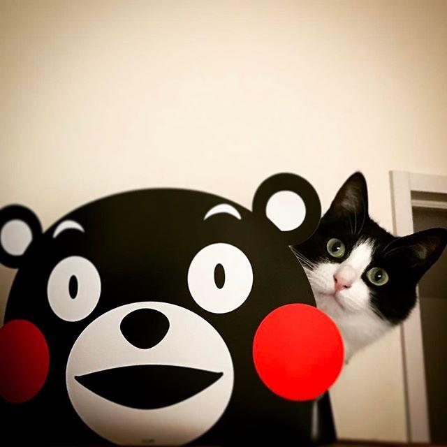 同化 しろくろ ネコリパ大阪 くまモン ネコリパブリック大阪 保護猫