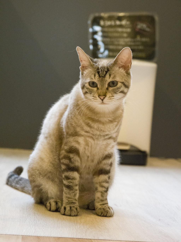美猫のシャミーちゃん