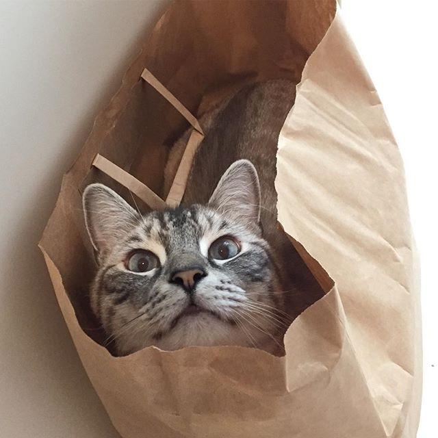 新聞回収袋ねこ
