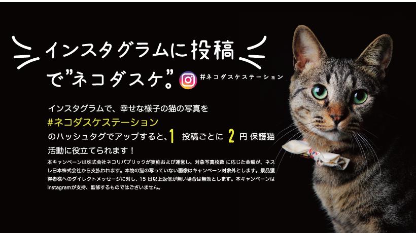 """【11/30まで】インスタグラムに「幸せな猫の写真」の投稿で""""ネコダスケ"""""""