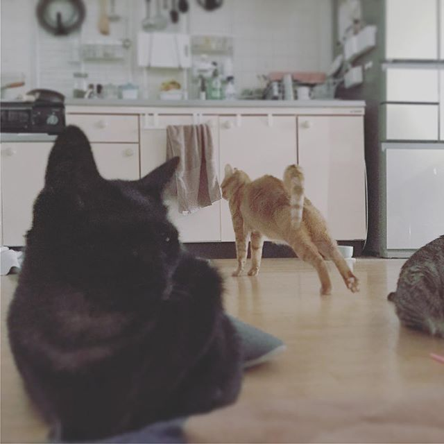 猫チョコピーカンで猫助け にゃんデーモーニング