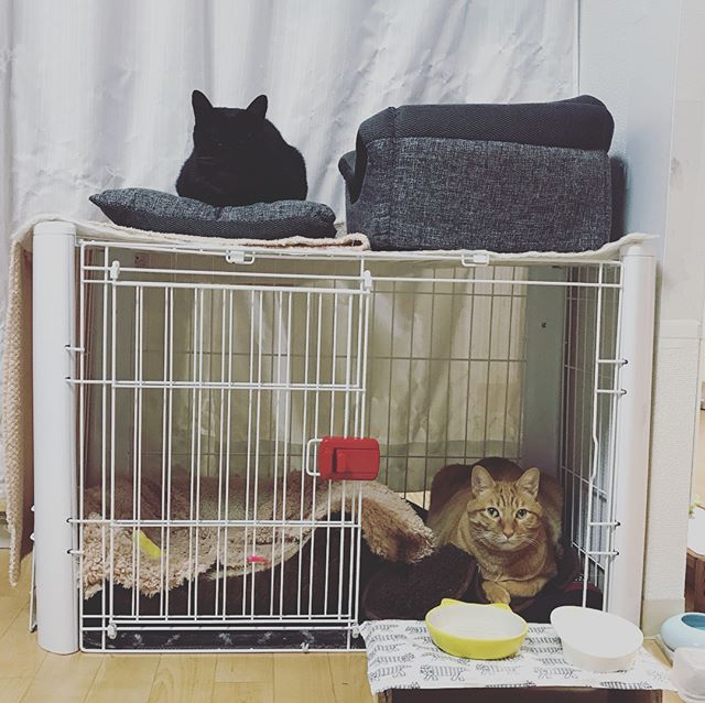 にゃんデーモーニング 猫チョコピーカンで猫助け