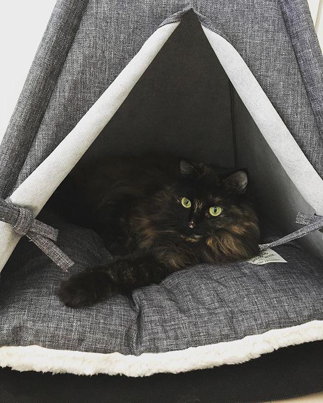 テント大好き
