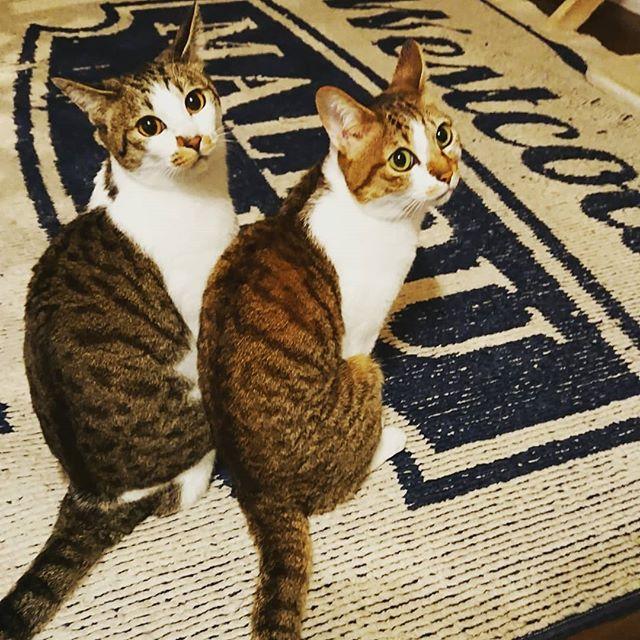 cats シャッターチャンス逃さないでね にゃんすたぐらむ ねこ 猫 カメラ目線