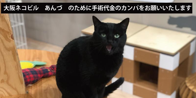 緊急!大阪ネコビル「あんづ」の手術のためのカンパをお願いします!